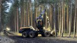 Tesla начала вырубку леса в Германии для строительства «зеленого» завода
